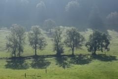 Vierer Baumgruppe auf Wiese