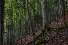 Frühlingswald am Hang