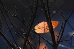 Herbstblatt in Aesten verkeilt