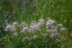 Strubbelblumengruppe