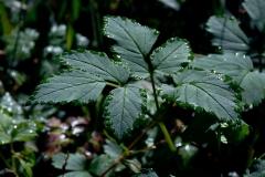 Blätter mit Perlrand
