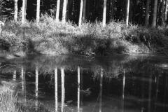 Bäume spiegeln im Teich