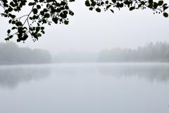 Flussufer bei Nebel