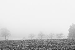 Bäume auf Nebelfeld