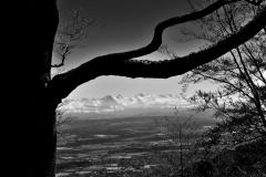 Baum mit Alpensicht