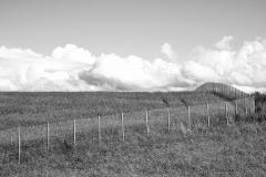 Gitterzaun auf Feld