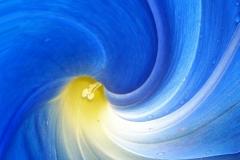 Winden -Blume blau verzogen