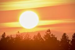 Sonnenuntergang mit Baumspitzen