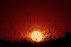 Feuerball im Gras