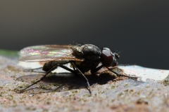 Fliege auf Metall