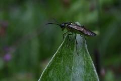 Insekt auf Blattspitze