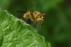 Insekt gelb auf grünem Blatt