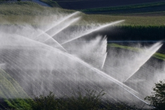 Feld  Wasserstrahl