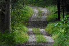 Weg im grünen Wald