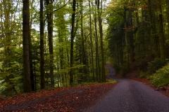 Schlangenweg im grünen Wald