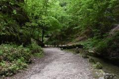 Waldweg am Bach im Frühling