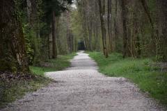 Fruehlingsweg