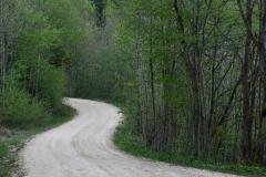 Waldweg geschwungen